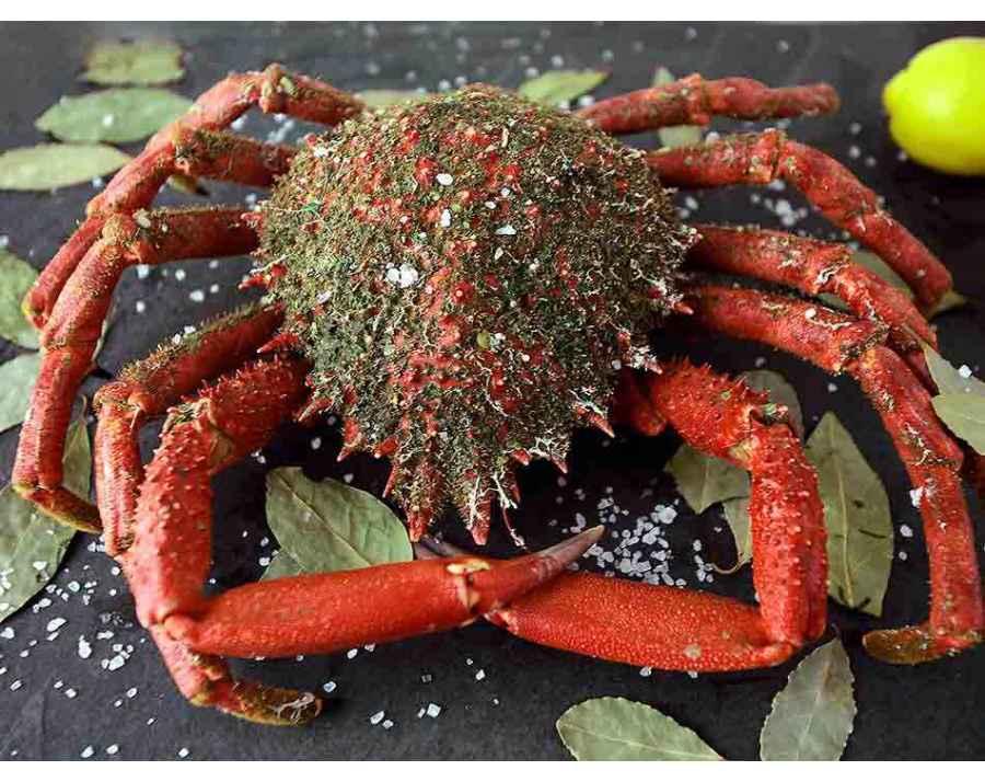 Araignée de mer de Galice Cuit