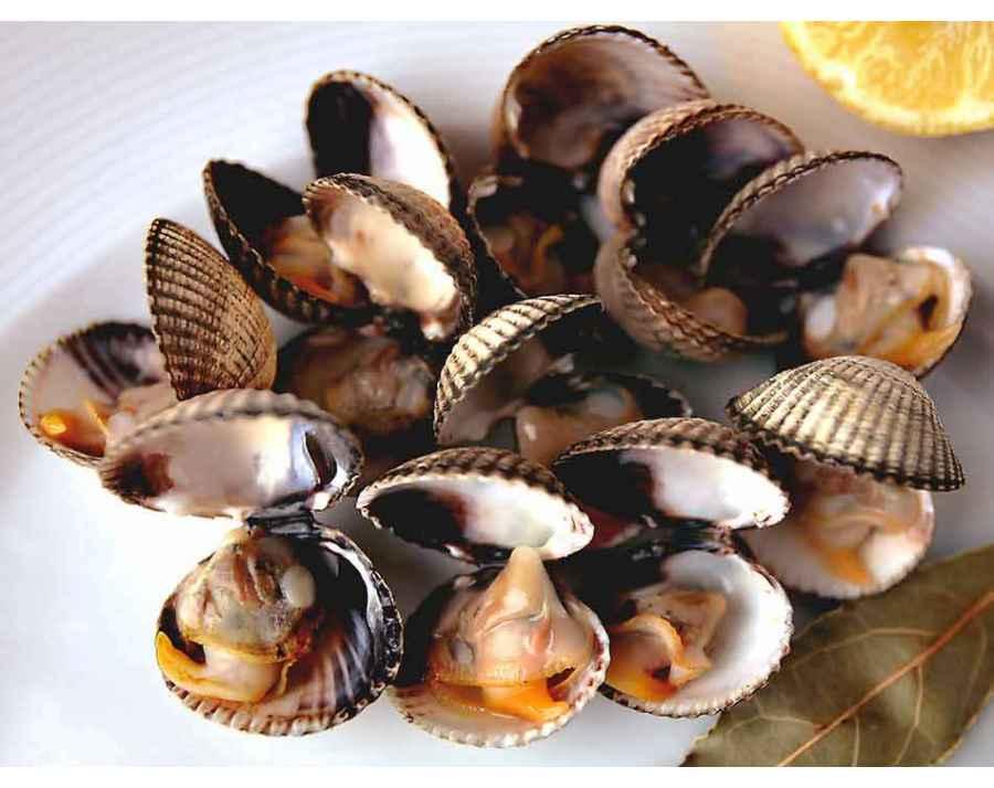 coques de galice