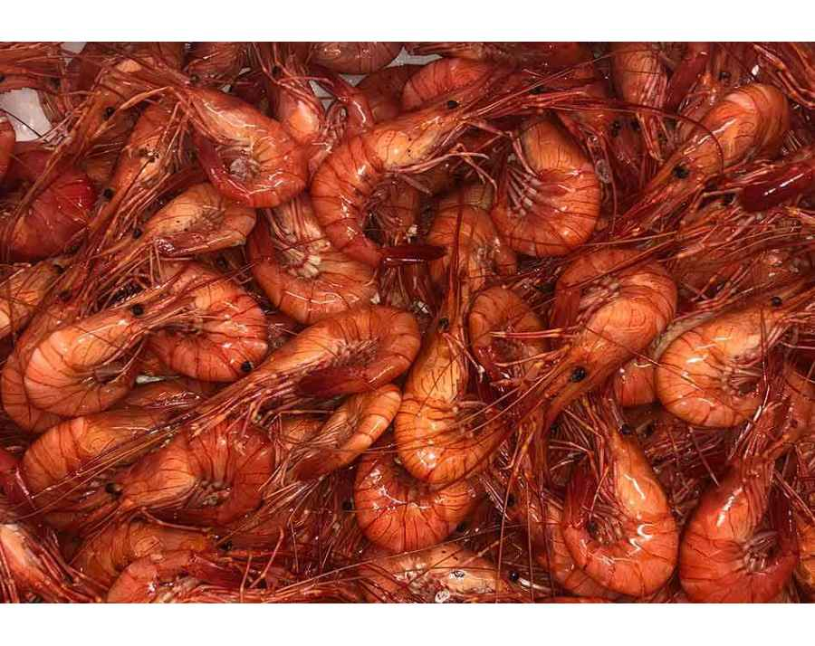 Crevettes de Galice
